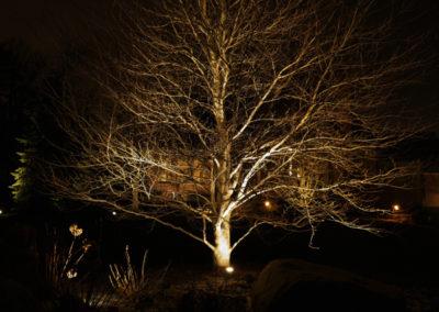 landscape-lighting-3