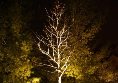 landscape-lighting-5